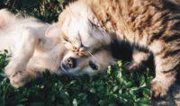CBD Hemp Safe Effective Cats Dogs Pets